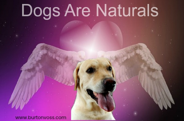 Hund Angel