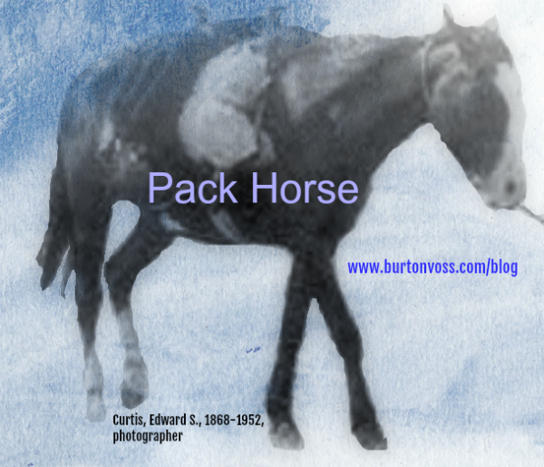 A pack horse carrying bags. He is being led by  a rope around the neck.